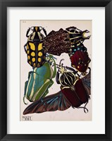Insects, Plate 3 Framed Print