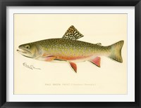 Framed Male Brook Trout