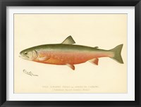 Framed Male Sunapee Trout
