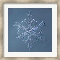 Framed Stellar Dendrite Snowflake 001.2.16.2014