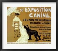 Framed Exposition Canine