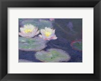 Framed Crop Water Lilies