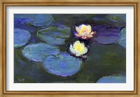 Framed Water Lily Detail Blur