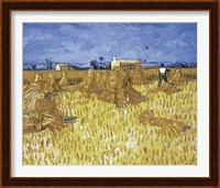 Framed Cornfield in Provence