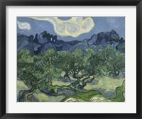 Framed Olive Trees