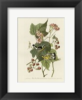 Framed Black And Yellow Warblers
