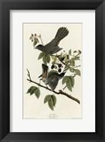 Framed Catbird