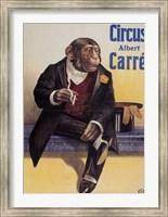 Framed Carre Circus Chimp