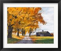 Framed Golden Maples