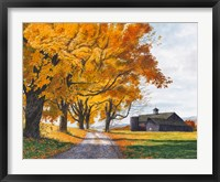 Framed Golden Maples