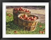Framed Apple Bushels
