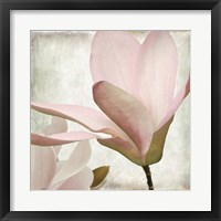 Petal Purity II Framed Print