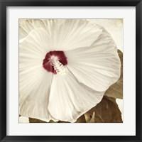 Framed Alabaster Hibiscus