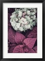 Framed Hydrangea