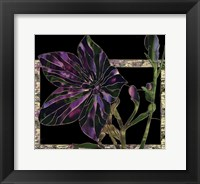 Framed Balloon Flower