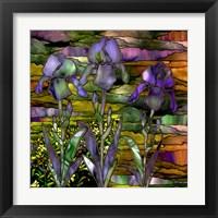 Framed Sunset Irises