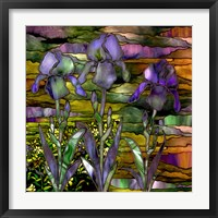 Framed Sunset Irises