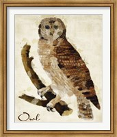 Framed Brown Owl