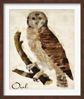 Framed Brown Owl