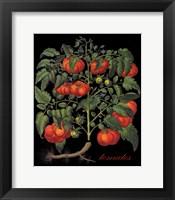 Framed Tomates