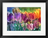 Framed Tulip Farm