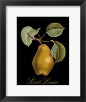 Framed St. Lerain Pear