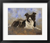Framed Collie Resting