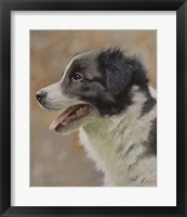 Framed Border Collie 9