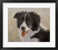 Framed Border Collie 11