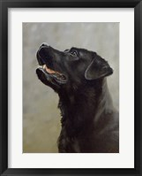Framed Black Lab 18