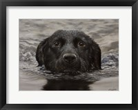 Framed Black Lab 20