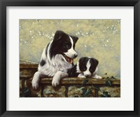 Framed Border Collie 15