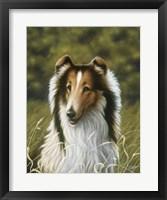 Framed Lassie
