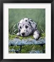 Framed Dalmatian Pup