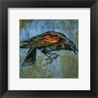 Redwing Blackbird Framed Print