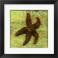 Framed Brown Starfish