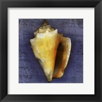 Framed Fighting Conch