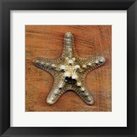 Framed Armored Starfish