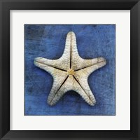 Framed Armored Starfish Underside