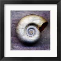 Moon Snail Framed Print