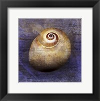 Framed Shark Eye 1