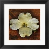 Framed White Dogwood