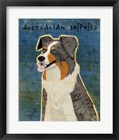 Framed Australian Shepherd Blue Merle