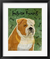 Framed English Bulldog Tan and White