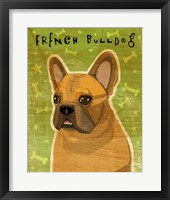 Framed French Bulldog Fawn