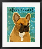Framed French Bulldog Fawn & White