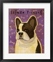 Framed French Bulldog - Whiten Brindle