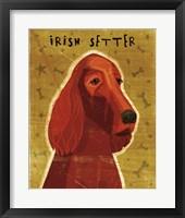 Framed Irish Setter