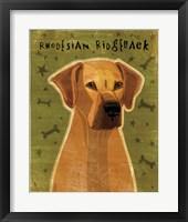Framed Rhodesian Ridgeback