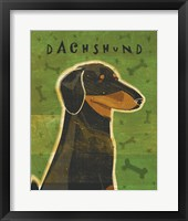 Dachshund (black and tan) Framed Print